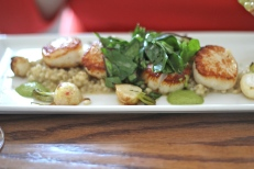 "pan seared sea scallops, spring greens sauce, creamy barley ""risotto"", braised baby hakurei turnips, JRG garden greens"