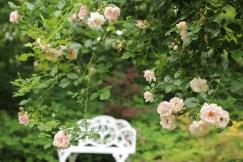 Trellis roses & garden bench