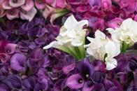 Calla Lilies San Francisco Flower Mart